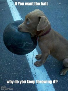 If u want the ball why do u keep throwing it well it's true haha