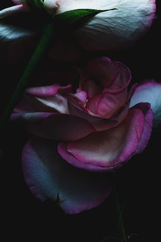 Photos of dying flowers shot by Billy Kidd Dark Flowers, Beautiful Flowers, Exotic Flowers, Billy Kidd, Midnight Garden, Dark Beauty, Flower Art, Flower Bomb, Still Life