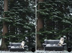 Photo shoot of an Australian Shepherd in snow. Belgium