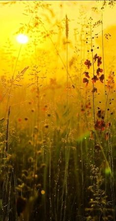 Lying in a meadow with your eyes closed and you open there right at this time and you see....Sunrise in Ukraine • photo: Konstantin Kirgincev on Artlimited.
