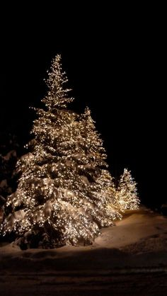 Brilliant #outdoor #Christmas #lights on evergreens make a stunning display!