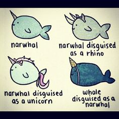 Narwhal disguises. I love narwhals...