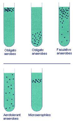 Obligate aerobes, obligate anaerobes, faculative anaerobes, aerotolerant anaerobes, microaerophiles
