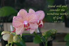 Stand still and consider the wondrous works of God. Psalm 104, Book Of Job, Christian Encouragement, Jesus Is Lord, Verse Of The Day, Me Time, Pretty Flowers, Christian Quotes, Never Give Up