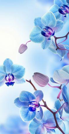 Wallpaper pentru iPhone, iPod si iPad - - New Ideas Orchid Wallpaper, Blue Flower Wallpaper, Blue Wallpaper Iphone, Blue Wallpapers, Pretty Wallpapers, Animes Wallpapers, Wallpaper Backgrounds, Iphone Backgrounds, Wallpapers Ipad