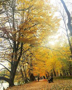 Le sentier avec feuilles morts  #ilovelyon #yellow #automne #fall #france #parc #park #travel #tetedor #tetedorparc #sentier #path #feuillesmortes #lyon #onlylyon #jaune #rue #weekend #visit