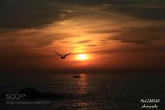 Sunset bird by simowhiteman #nature #photooftheday #amazing #picoftheday