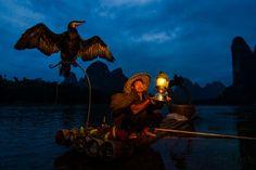 china fisherman birds - Pesquisa Google