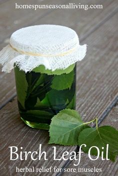 Birch Leaf Oil for Sore Muscles Find relief for sore muscles by making this easy and herbal birch leaf oil.Find relief for sore muscles by making this easy and herbal birch leaf oil. Natural Health Remedies, Natural Cures, Natural Healing, Herbal Remedies, Natural Foods, Natural Products, Natural Treatments, Holistic Remedies, Uti Remedies
