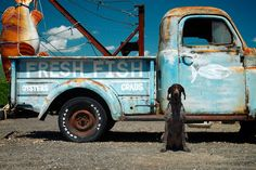 """""""The Fishmonger - Pawleys Island, South Carolina """" Pawleys Island South Carolina, Alaska Winter, Clever Dog, Island Life, Home And Away, Key West, Dog Owners, Vacation Spots, The Good Place"""