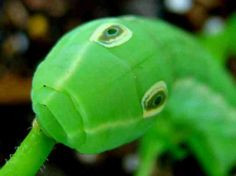 5 Amazing Animals With Eyes in the Back of their Heads
