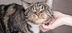 Darum solltest du deine Katze täglich knuddeln