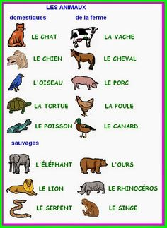 To Learn French Kids How To Learn French Apps Referral: 7745275272 French Expressions, Basic French Words, How To Speak French, Learn French, French Basics, French For Beginners, French Language Lessons, French Language Learning, Spanish Lessons