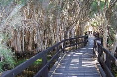 11 of the best walking/hiking trails in Perth.