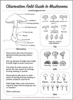 Identifying Mushrooms Plus a Field Guide Printable — Scratchmade Journal Growing Mushrooms, Wild Mushrooms, Stuffed Mushrooms, Garden Mushrooms, Edible Mushrooms, Mushroom Identification, Plant Identification, Mushroom Guide, Mushroom Hunting