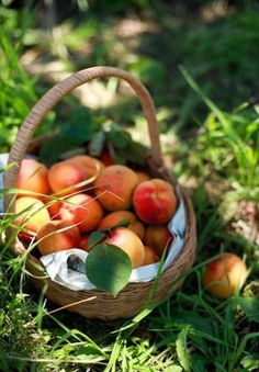 who eats: picking summer fruits and a little more, fruit basket, Summer Fruit Basket LightDigital. Country Life, Country Living, Country Charm, Southern Charm, Southern Living, Beautiful Fruits, Beautiful Farm, Beautiful Things, Peach Trees