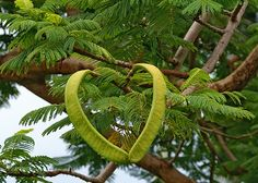 0926 HEARTS OF NATURE by JRmanNn, via Flickr