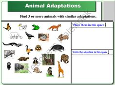 Smartboard Animal Lessons: Ecosystems, Adaptations, and Food Chains product from TCHRGRL on TeachersNotebook.com