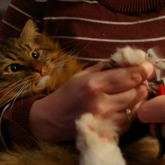 10 Lifehacks Every Cat Owner Should Know