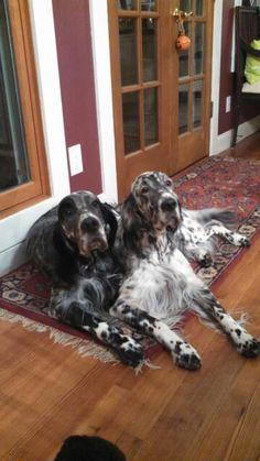 Bella B and Bentley, siblings