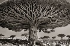 Beth Moon's photography showcases the beauty of the world's oldest trees, taken over her 14 year journey across the globe.