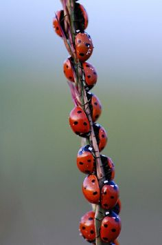 Lady Bug, Lady Bug, fly away home.  To my home.  (love this book, but don't really want a ladybug invasion)