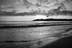 Flight of Fancy Monterey Coast Black and White by Nikolyn McDonald