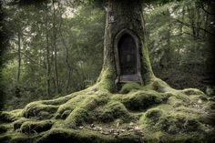 Tree House captured by UK photographer Gary Dixon #Treehousing #SummerofDoing