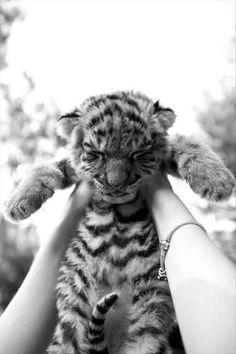 A cute little tiger!