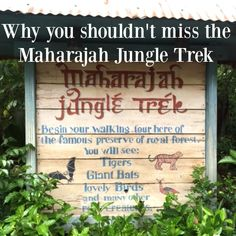Learn why you shouldn't miss a trip to the Maharajah Jungle Trek at Disney's Animal Kingdom.