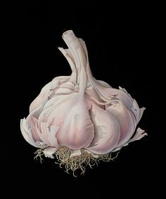 Garlic watercolor illustration by Susannah Blaxill