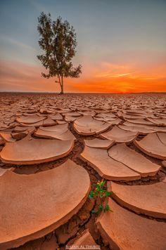 Sultan Al Thubiti Photography 500px.com/photo/62355437 #tree #desert #life