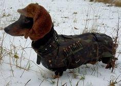 Hotdog hunter