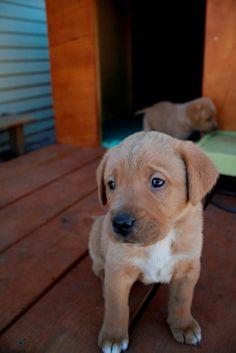 Love the little worried puppy eyes.