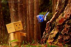 ronaldo ichi / portrait photos on @ronaldoichiphotography | #danbo #danboard #cardboard #papercraft #ンボー #よつばと#photography #fotografia #photographer #fotografo #Yotsuba #instagramers #フォトグラフィー #写真 #nature