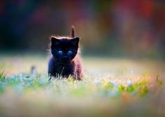 quietly the mighty Panther stalks....!