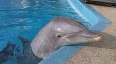 Dolphins Recognize The Calls Of Long-Lost Friends. Scientists have known for years that dolphins recognize each other by the sound of each animal's signature whistle. But it wasn't known for just how long dolphins could remember these whistle calls.