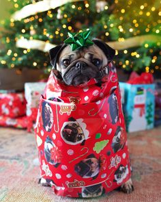 Photo by Doug The Pug on December via Cute Cats And Dogs, Cute Pugs, Cute Dogs And Puppies, Funny Pugs, Funny Pug Pictures, Pug Pics, Pug Wallpaper, Celebrity Dogs, Doug The Pug