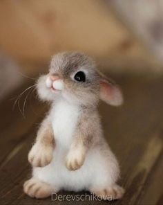 Baby Animals souvenirs from wool. Baby Animals souvenirs from wool. Baby Animals Super Cute, Cute Baby Bunnies, Cute Little Animals, Cute Funny Animals, Cute Cats, Funny Dogs, Cutest Animals, Bunny, Baby Animals Pictures