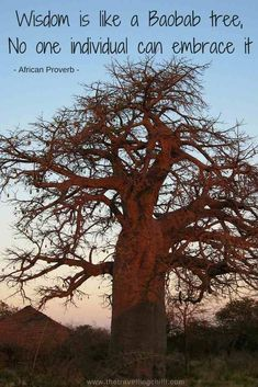 Wisdom is like a baobab tree - no one individual can embrace it