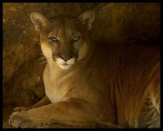 Isn't this just a regal look?  Beautiful animal.