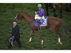 Chromie wins the Preakness! Race Horses, Horse Racing, Preakness Stakes, Kentucky, Riding Helmets, Derby, Chrome, California