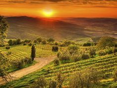 Chianti Country:     Yes, it's home to some of Italy's most famous reds, but it's also one of the best spots in the country for an afternoon drive: along winding, cyprus-lined roads, past rolling green hills and golden fields dotted with sunflowers. It's the side of Tuscany we love most.