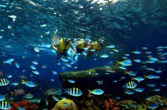 Marine Life Park SG
