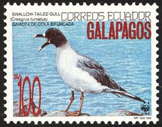 Swallow-tailed Gull stamps - mainly images - gallery format