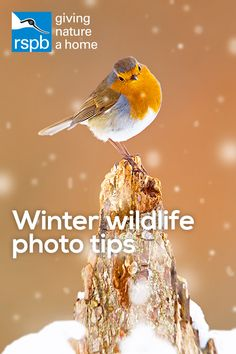 Embrace the weather! Experiment with shutter speeds to capture falling rain or snow. Practise with a number of shots, making small adjustments to get your desired image. Brush up on your nature photography skills and knowledge with our Nature's Home magazine, free with RSPB membership four times a year. Join the RSPB to learn more about nature and help give it a home.