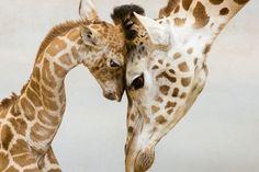 出典:interesujace.com 一目見ただけで親子の愛を感じることの出来る素敵な写真を集めました。とても温かい気持ちになることができます。どうぞご覧下さい。 1.「父ちゃんこれでいいの?」親子