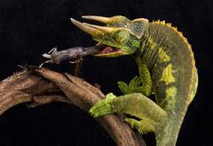 Jaw-Dropping Nature Pic by Angi Nelson for your inspiration