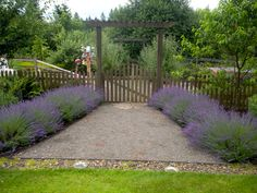 lavender and bees - Google Search