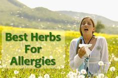 Best herbs for Allergies - organized herb lists for different healing properties